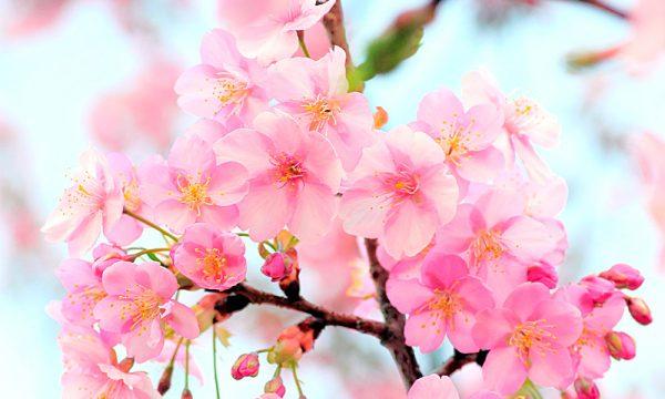 鞆の四季「春」